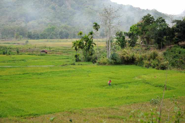 What makes a landscape biologically diverse and its people food secure? We want to answer this question by collecting social-ecological characteristics of farming landscapes through this questionnaire (Photo by Neil Collier on Flores/Indonesia).